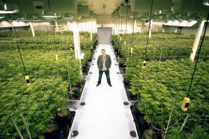 Florida weed business license