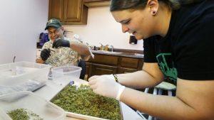 Cannabis business institute