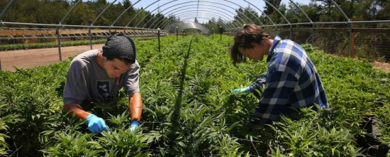 Cultivation business permits