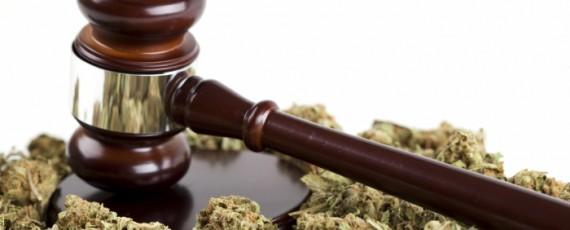 Marijuana law firm