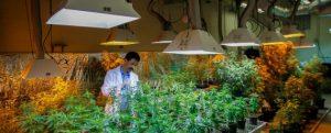 Online Marijuana College