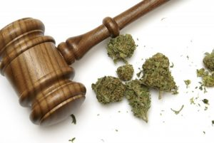 Cannabis business law company
