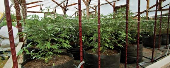 Applications for marijuana distribution