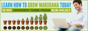 Online cannabis education